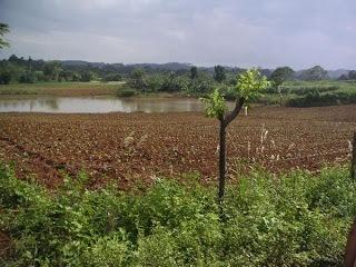 Tobacco Farm in vinales