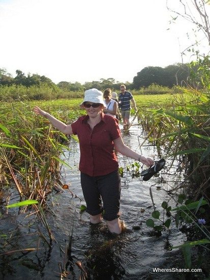 Wading through the pantanal wetlands tour Brazil