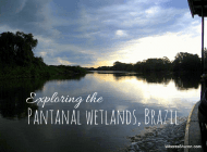 An amazing Pantanal wetlands tour