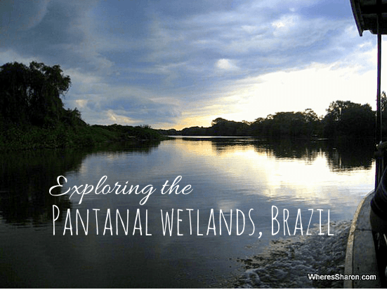 Exploring the Pantanal Wetlands Brazil