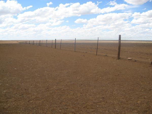 dingo fence in coober pedy