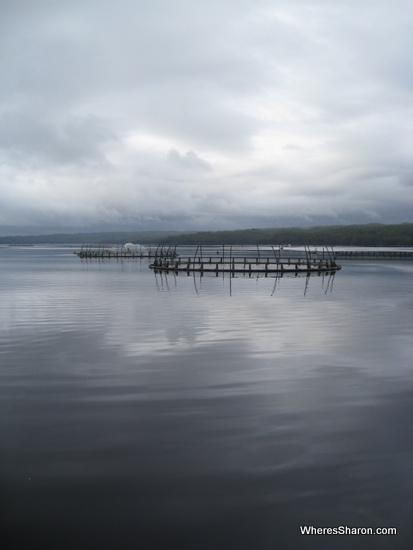 Fish farm on Gordon River cruise
