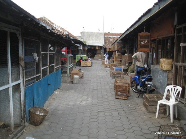 Pet market, Jogjakarta