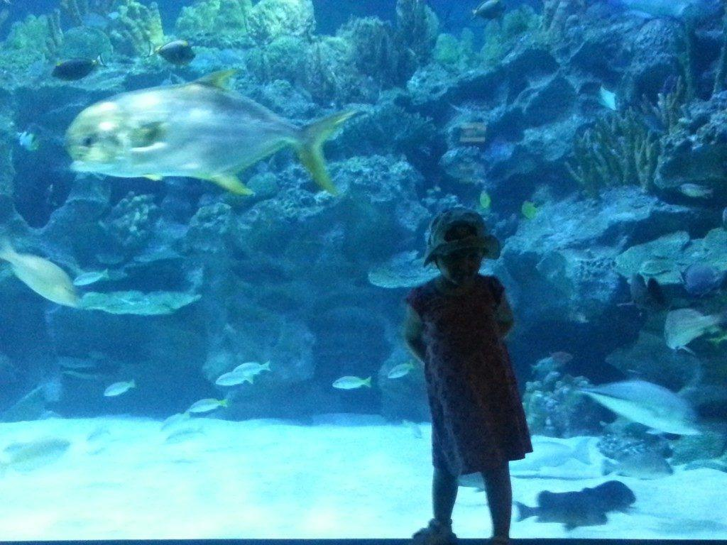 Toddler at the Kuala Lumpur Aquarium with a big fish