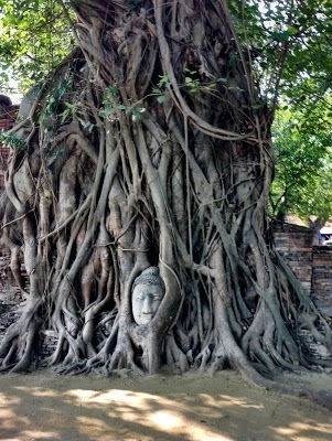 Buddha head embedded in the roots of this tree in ayutthaya