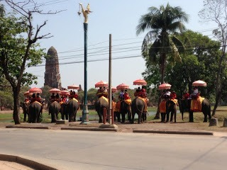 line of elephants at the Elephant kreel in Ayutthaya