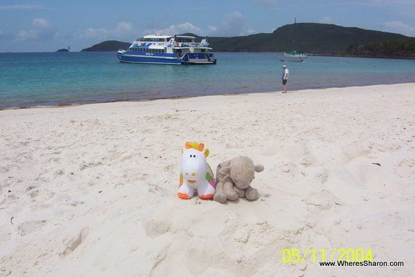 toy lamb and cow on Whitehaven Beach in the Whitsundays