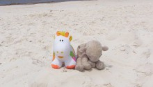 Fleecie and the cow on whitehaven beach in the whitsundays Australia