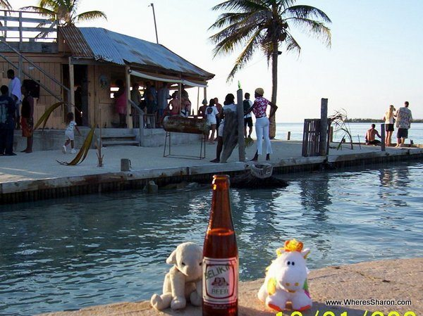 toy lamb and cow drinking a beer on Caye Caulker Belize
