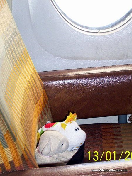 toy lamb and cow sitting in a plane in Guatemala