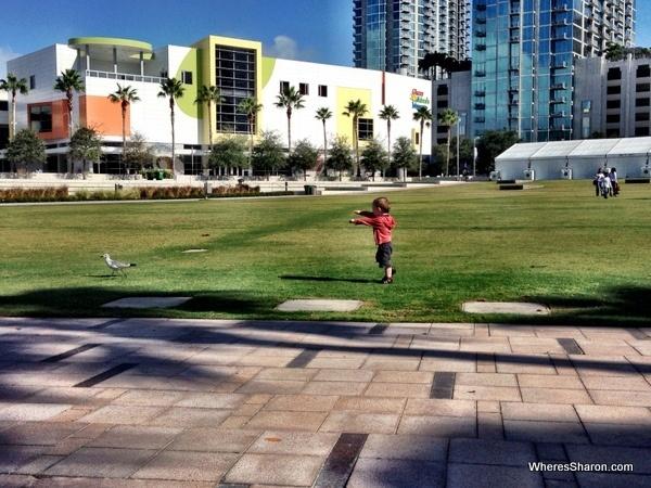 toddler chasing seagulls at tampa riverwalk