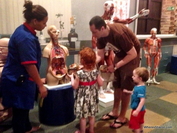 Body with organs at the Museo Infantil Trampolin