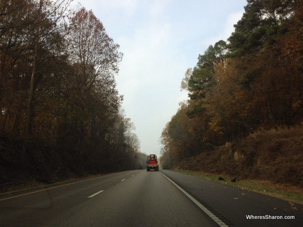 road between Vicksburg and Jacskon lined with big pretty trees