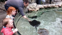 touching stingray at Tennessee Aquarium with kids