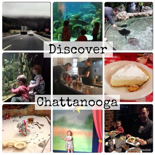 Tennessee aquarium, chattanooga childrens museum zarzours things to do with kids