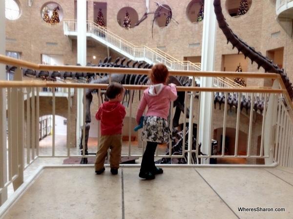Big dinosaur at Fernbank Natural History Museum atlanta GA