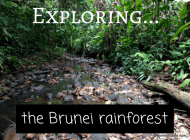 Exploring the pristine rainforests of Brunei