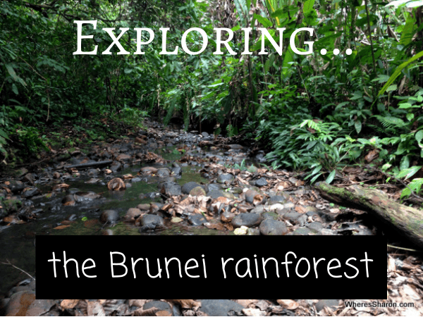 Exploring the brunei rainforest