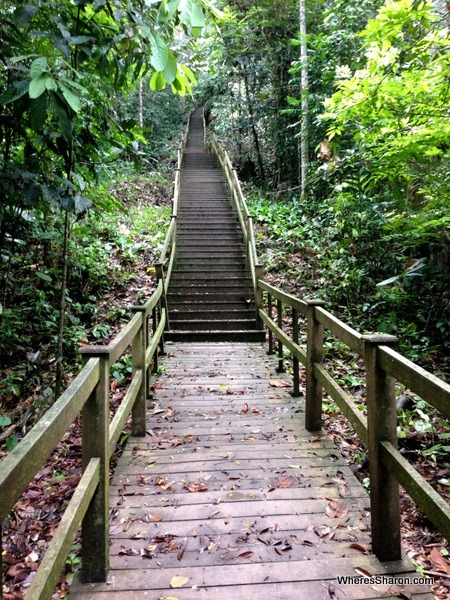 The start of the 1000 stairs to get to the rainforest canopy walkway at ulu temburong national park