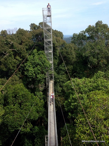 rainforest canopy walkway at ulu temburong national park