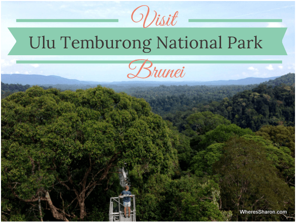 exploring ulu temburong national park brunei