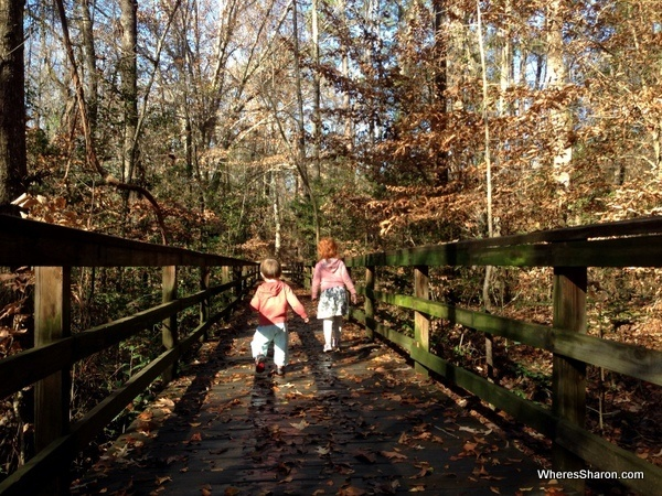 Walking the great boardwalks at Congaree National Park Columbia SC