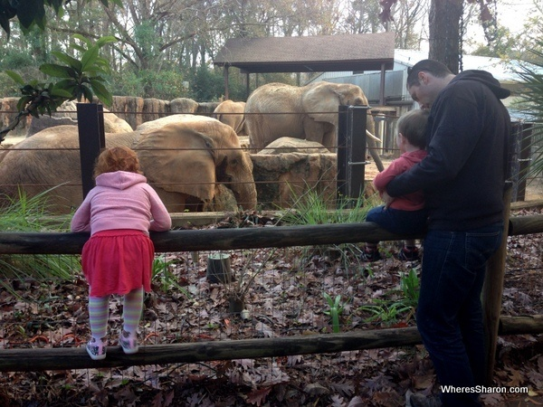elephants at Riverbanks zoo Columbia SC with kids