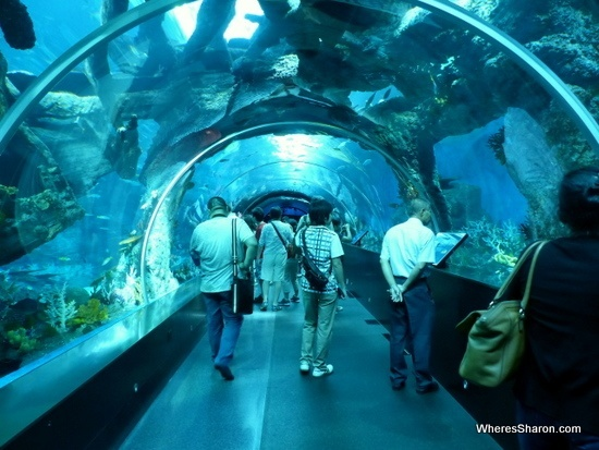 S E A Aquarium Resorts World Sentosa