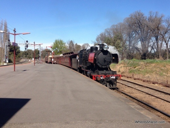 The steam train coming into castlemaine station on the Goldfield railway