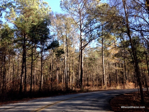 The road on the way to Congaree National Park driving from atlanta to miami