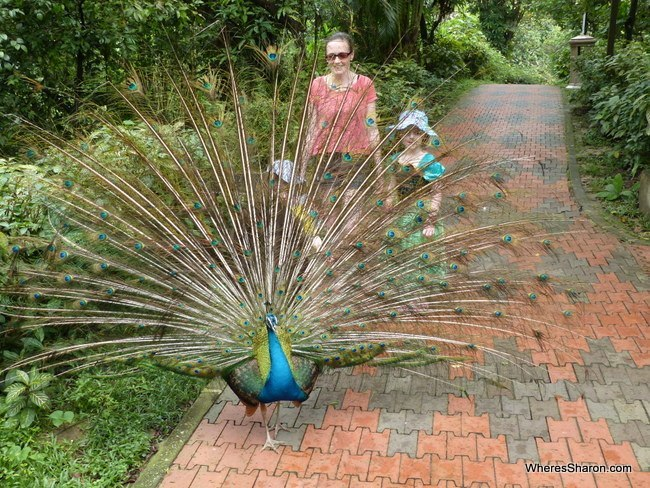 kl bird park best places in malaysia for families
