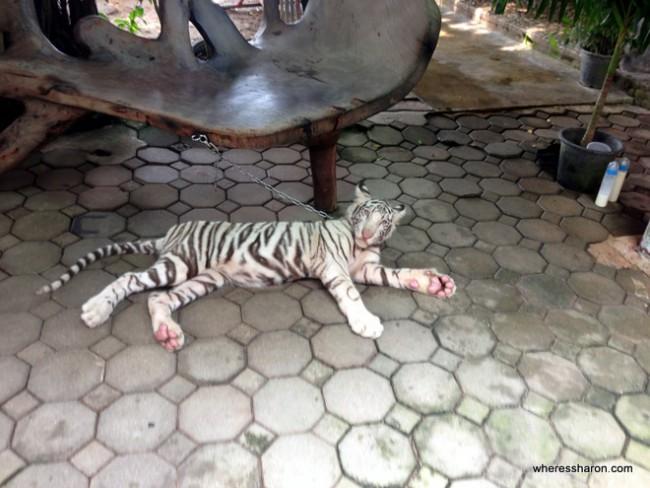 The Million Years Stone Park and Pattaya Crocodile Farm