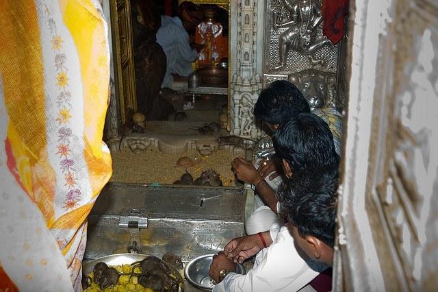 Karni Mata Rat Temple