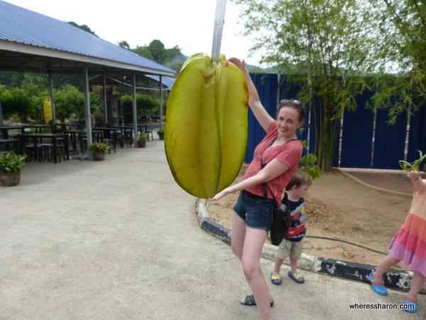 Big starfruit at MARDI Agro Park