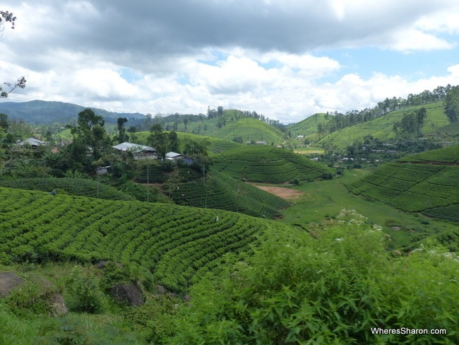 The scenery on the train ride from Kandy to Nuwara Eliya
