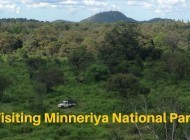 Going on Safari in Sri Lanka – Minneriya National Park