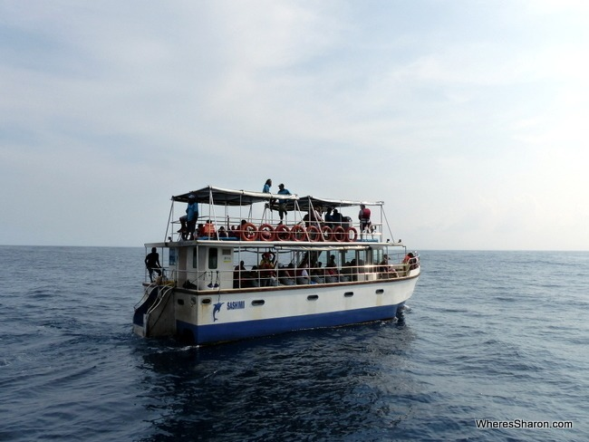 whale expedition boat in Mirissa Sri Lanka