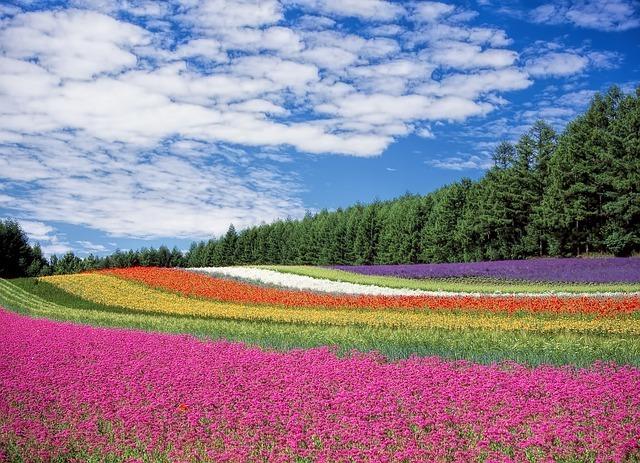 The Hokkaido countryside