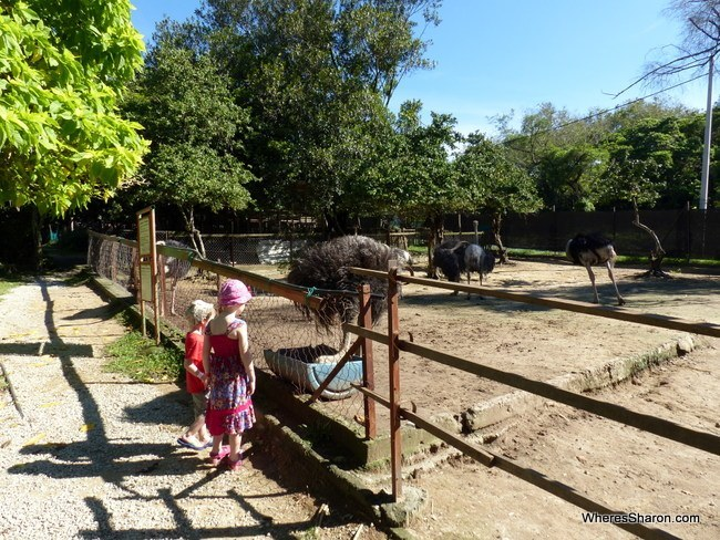 what to do in Port Dickson Ostrich Farm