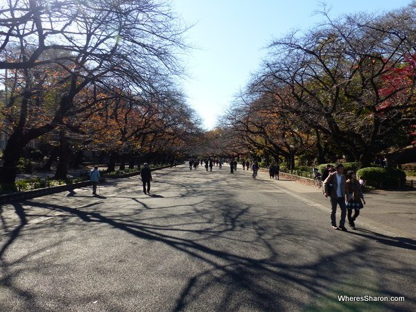 Cherry trees in Ueno Park - no cherry blossoms for me...