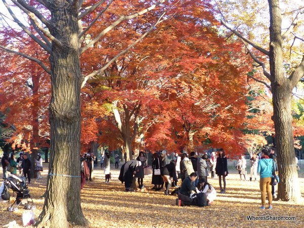 There were some more great autumn displays in Yoyogi Park, which had lots of open space and trees.