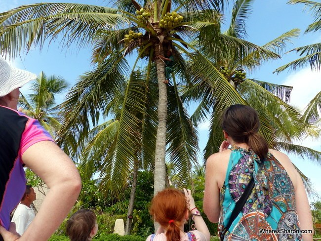 Activities at Novotel Lombok