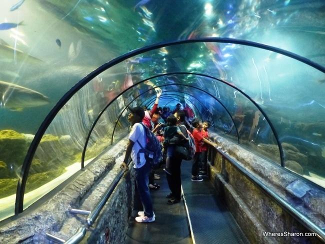 tunnel at Seaworld Jakarta