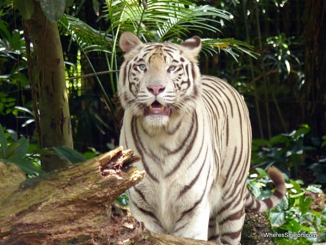 activities for kids in singapore at Singapore Zoo