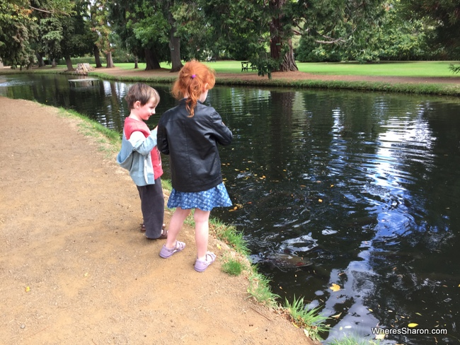 Salmon Ponds things to do in Hobart