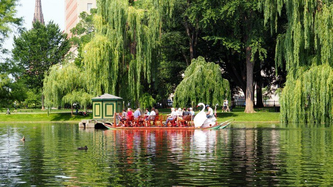 kid friendly things to do in boston at Boston Public Gardens