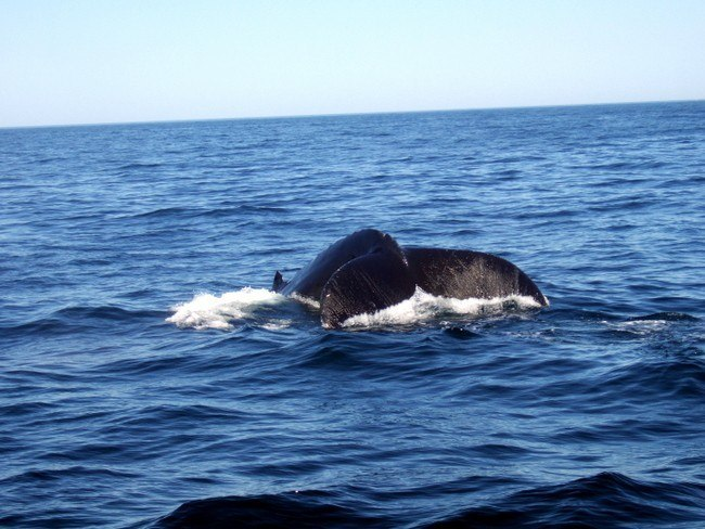 boston family activities - whale watching