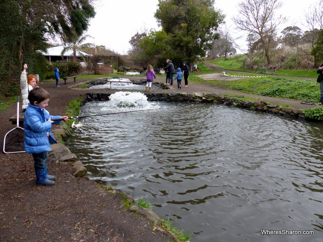 ballarat things to do for kids at Tuki Trout Farm