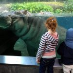 Top 17 Things to do in San Diego with Kids