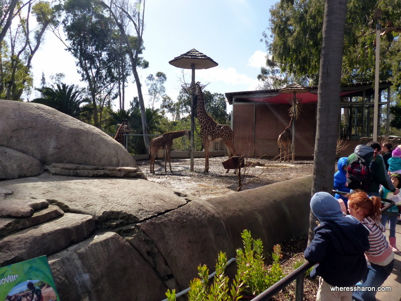 san diego attractions for families San Diego Zoo